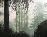 Dawn, Misty Forest