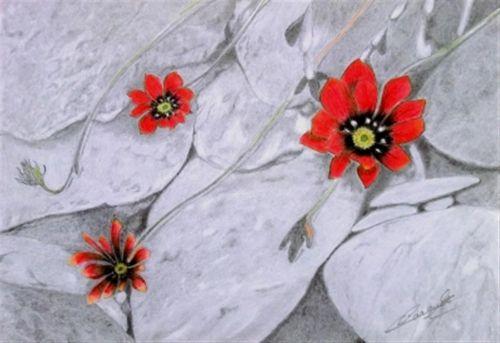 fleurs-de-cailloux_500x500.jpg
